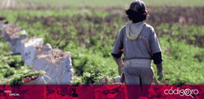 En una comercializadora agrícola, ubicada en el municipio de Huimilpan, se detectaron laborando a ocho menores de edad, sin afiliación al Instituto Mexicano del Seguro Social
