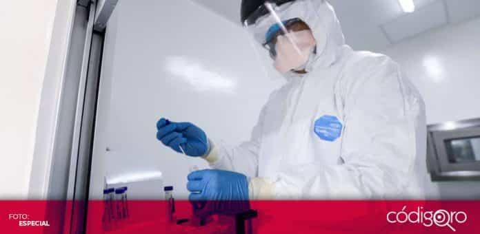 Actualmente, la UAQ está realizando pruebas preclínicas de su vacuna contra COVID-19 en cabras, ovejas, ratones, conejos y cerdos. Foto: Especial