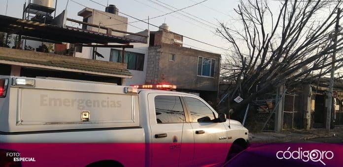 Un total de 6 árboles cayeron como consecuencia de los fuertes vientos en la ciudad de Querétaro. Foto: Especial