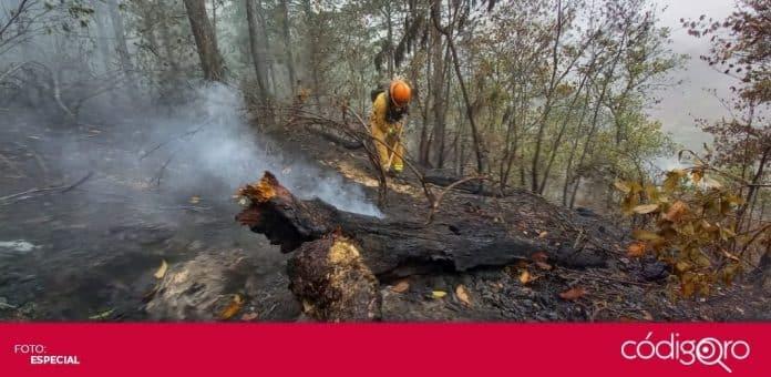 El incendio en la Sierra de Santiago ha consumido más de 8 mil 500 hectáreas de vegetación. Foto: Especial