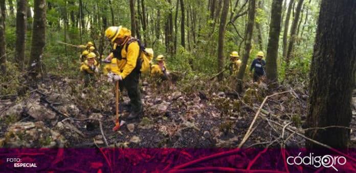 Ha sido controlado entre 90 y 95% el incendio forestal en el municipio de Landa de Matamoros. Foto: Especial