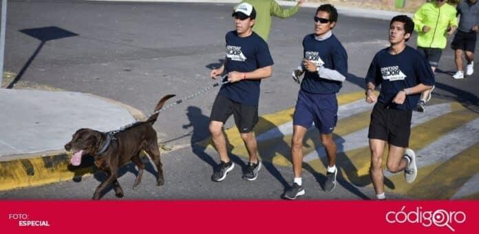 El candidato del PAN a la presidencia municipal de Corregidora, Roberto Sosa Pichardo, realizó una carrera atlética. Foto: Especial