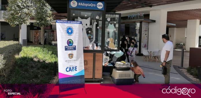 El municipio de Querétaro instalará módulos de adopción de mascotas en plazas comerciales. Foto: Especial