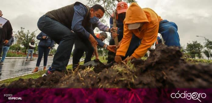 La administración municipal de Querétaro celebró el Día Nacional del Árbol. Foto: Especial