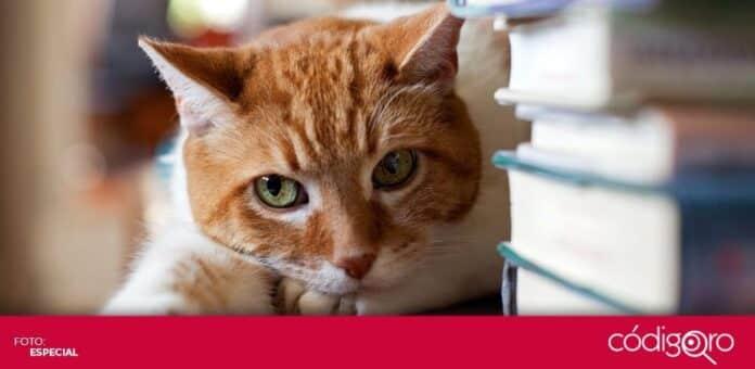 Recomendaciones para los amantes de los gatos y los libros. Foto: Especial